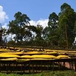Ethiopia Aricha Kebele