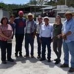 Guatemala Liquidambar