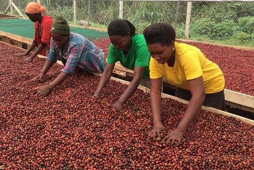 Uganda Nyabubare