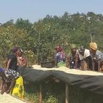 Tanzania Tweega Kasto