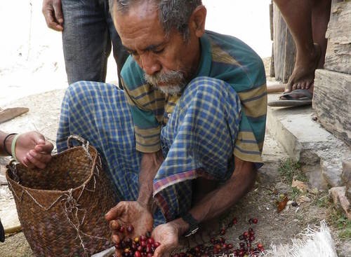 East Timor Eratoi 1