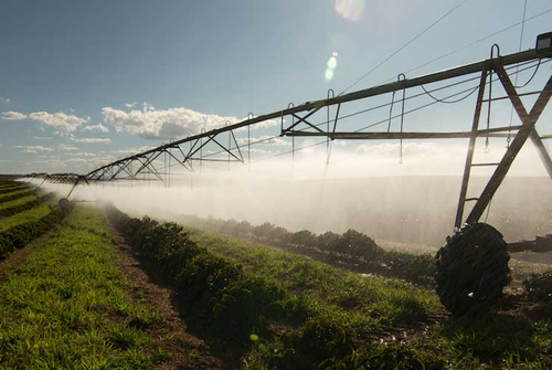 Brazil - Fazenda Progresso