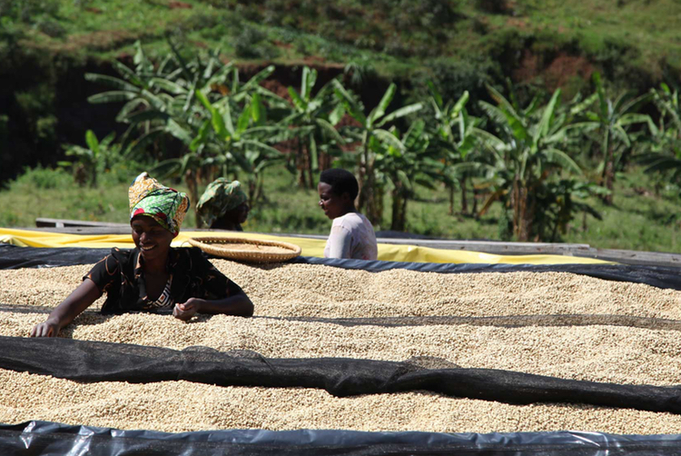 Rwanda - Remera Caracoli