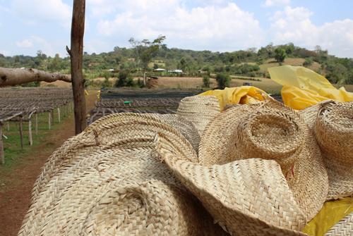 Ethiopia - Biftu Gudina Lot 5